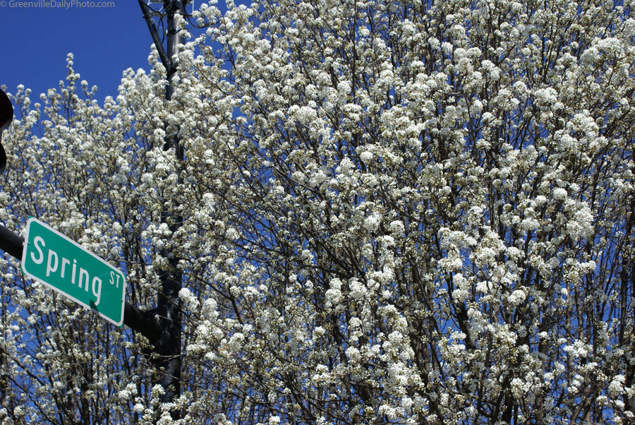 Signs of Spring in Greenville, SC.  This photo was taken by Denton Harryman and posted at GreenvilleDailyPhoto.com on 3/24/2010.