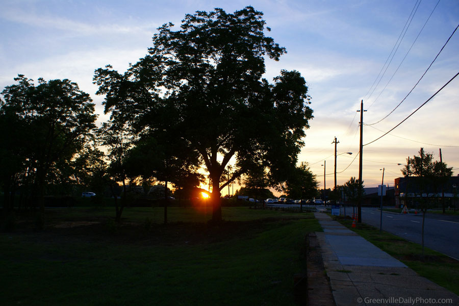 A tree at sunset on West Washington Street in downtown Greenville, SC.  This photo was taken by Denton Harryman and posted at GreenvilleDailyPhoto.com on 6/13/2010.