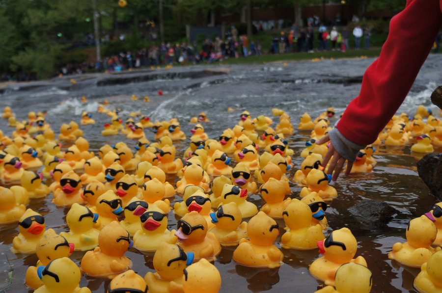 Rubber Duck Derby | Greenville Daily Photo